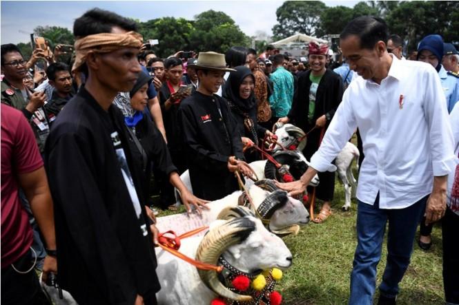 Presiden Joko Widodo (kanan) mengamati domba Garut saat menghadiri Gelar Budaya Domba Garut di Garut, Jawa Barat, Sabtu (19/1/2019). ANTARA FOTO/Puspa Perwitasari.