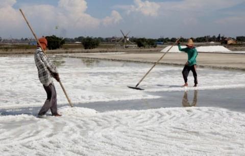 Pemerintah Disarankan Tingkatkan Kapasitas Produksi Petani Garam