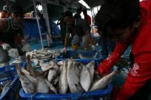 Perwakilan Nelayan Usul Bulog untuk Sektor Perikanan