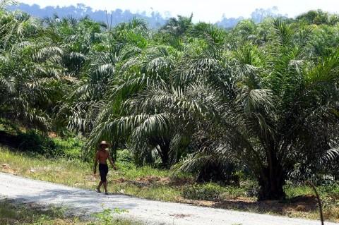 Saingi Malaysia, Indonesia Bisa Jadi Penentu Harga CPO pada 2035