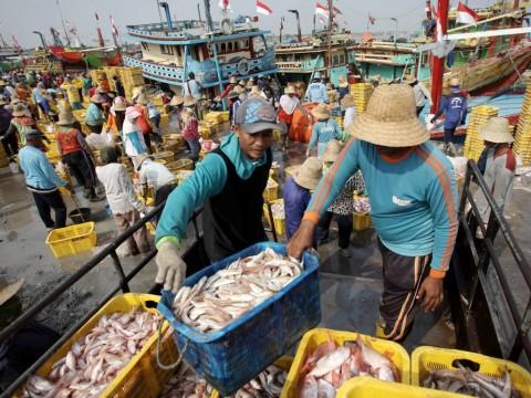 Masyarakat Terdampak Tsunami Diminta Tak Ragu Mengonsumsi Ikan