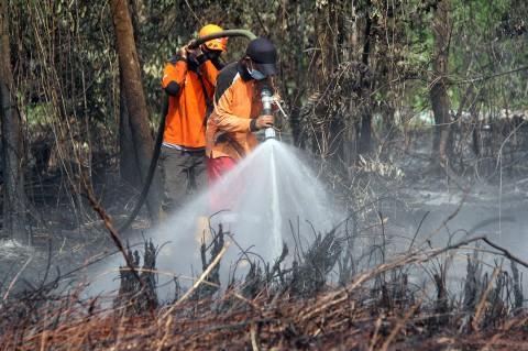 Kebakaran Hutan di Dumai Meluas