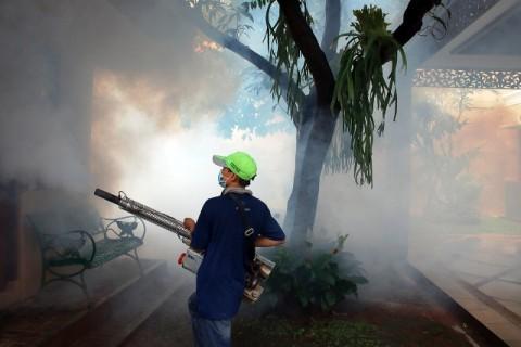 Penanggulangan DBD di Jakarta Mendesak