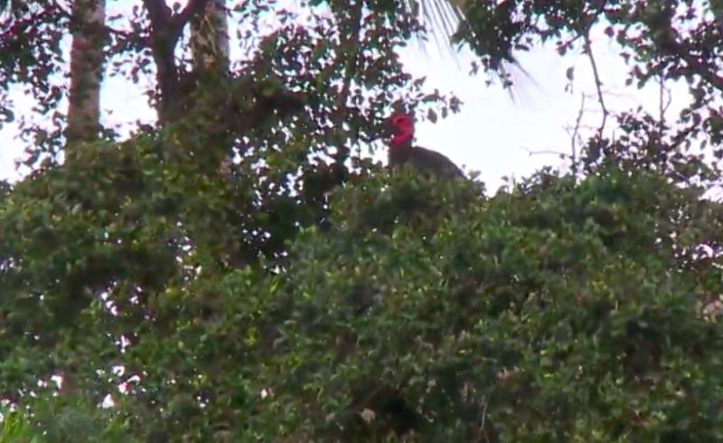 Burung eksotis yang lepas dari kandangnya. (Foto: UPI).