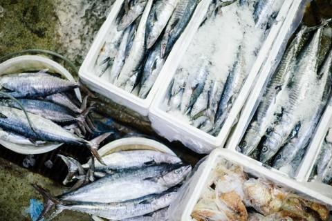 Berapa Lama Sebaiknya Menyimpan Ikan di Kulkas?