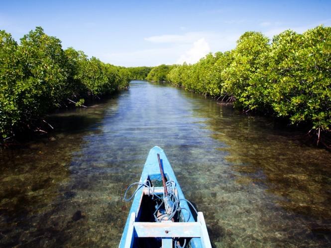 Ilustrasi hutan bakau. MI/Sumaryanto Bronto