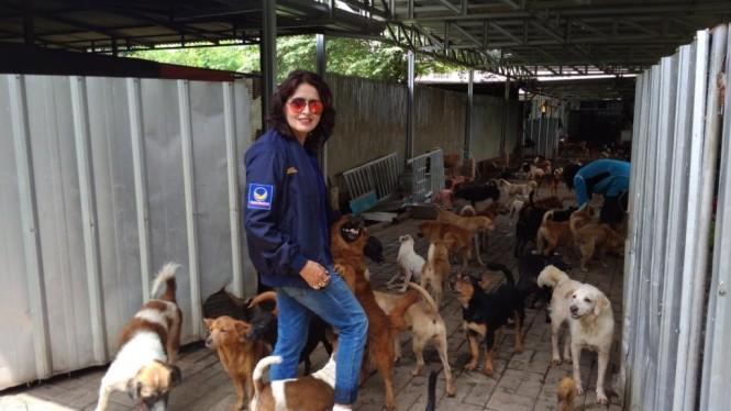 Calon anggota DPR daerah pemilihan DKI II dari Partai NasDem, Shanti Ramchand, di penampungan hewan Pejaten, Jaksel. Foto: Medcom.id/Candra Yuri Nuralam.