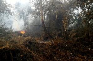 Hampir 500 Hektare Hutan dan Lahan di Riau Terbakar