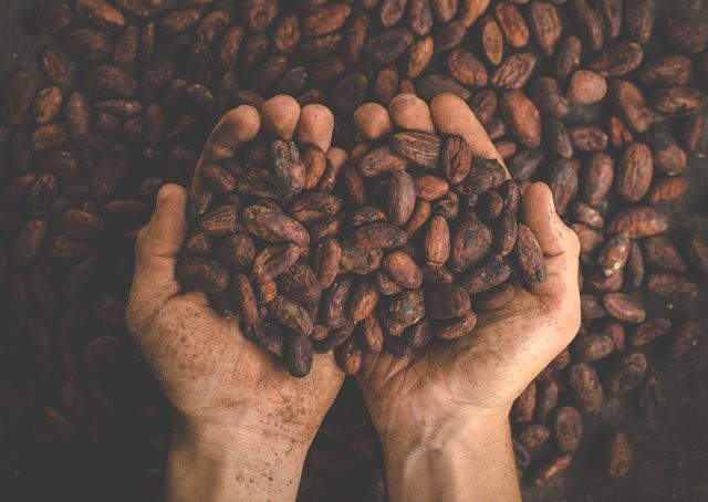 Sebuah penelitian yang diterbitkan di BMJ Open pada Januari 2017 menemukan obat dengan bahan dari kakao lebih ampuh meredakan batuk daripada kodein reguler. (Foto: Pablo Merchan Montes/Unsplash.com)