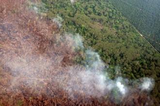 Eksekusi Perusahaan Perusak Hutan Menunggu Salinan Putusan