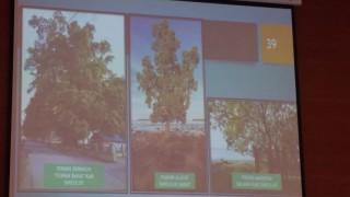 Pohon Berakar Kuat Efektif Redam Dampak Tsunami