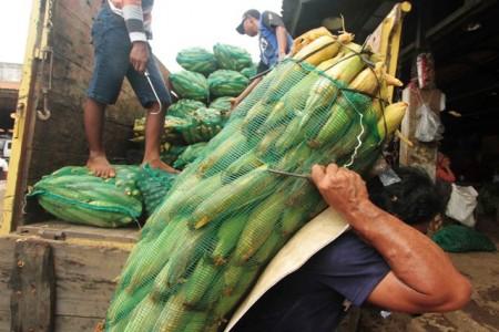 Penurunan Impor Jagung Untungkan Rp33,12 Triliun