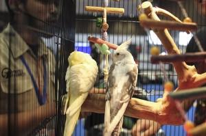 Melihat Hewan-hewan Lucu di Jakarta Indonesia Pet Show 2019