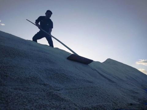 Kuota Impor Garam Akan Ditinjau Ulang Tiap 3 Bulan