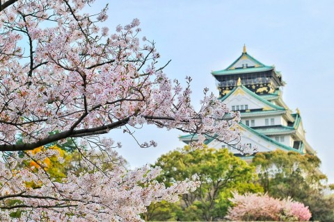 Selain di Jepang, Ini Lima Tempat Menikmati Keindahan Bunga Sakura