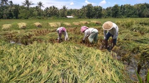 Petani di Kulon Progo Merugi Karena Banjir