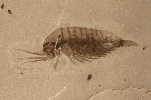 Ilmuan Temukan Ribuan Fosil Spesies Baru di Tiongkok