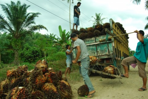 Indonesia-India Siap Bahas Perdagangan Sawit
