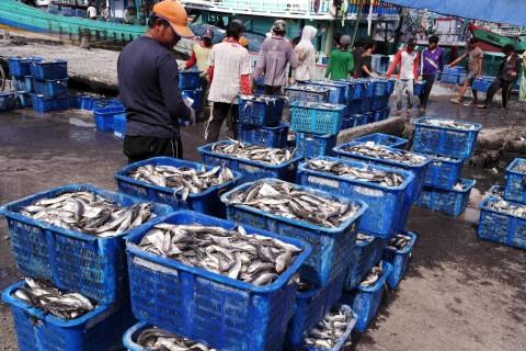 KKP Sebut Stok Ikan di Perairan Melonjak
