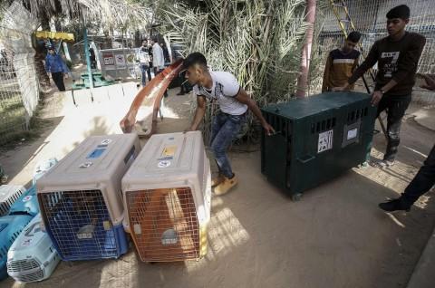 Satwa Kebun Binatang Gaza Dievakuasi ke Yordania