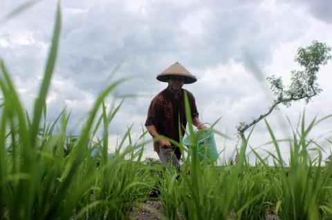 Stok Pupuk Subsidi Jabar-Banten Dipastikan Aman
