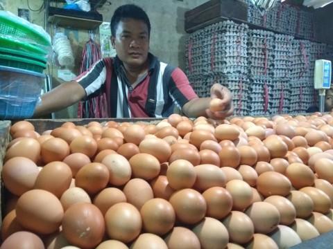 Bulog Kesulitan Kendalikan Harga Telur