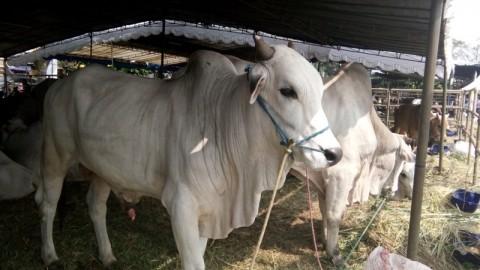 Mentan Buka Peluang Impor Daging Sapi dari Argentina