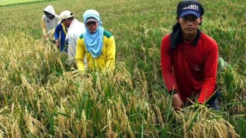 Komisi IV Kritisi Penurunan Anggaran Sektor Pertanian
