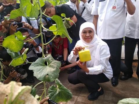 Khofifah Ajak Petani Melon Berinovasi