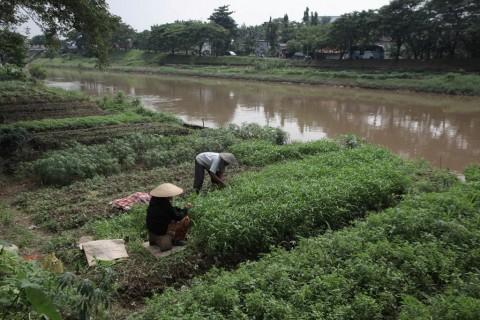 BPK Sarankan Dana Riset Pertanian di Kementan Ditingkatkan