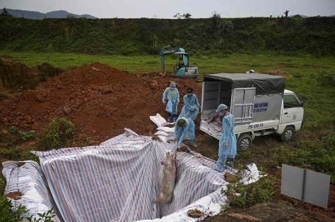 Korut Terapkan Langkah Darurat untuk Tangani Flu Babi