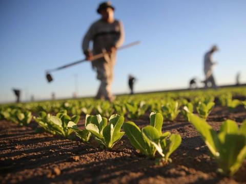 Imbas Perang Dagang, Ekspor Produk Pertanian AS Anjlok