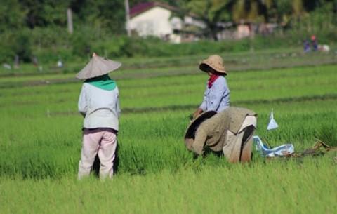 Program Infrastruktur Sosial Mudahkan Petani Distribusi Produk