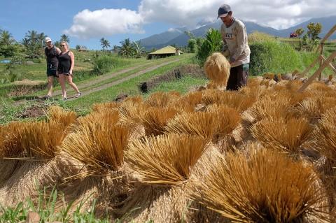 Budaya Pertanian Desa Jatiluwih Jadi Daya Tarik Wisatawan