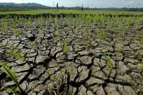 Butuh Kerja Bareng untuk Mengatasi Kekeringan Lahan Pertanian