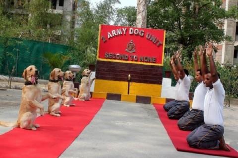 Kawanan Anjing di India Ikut Rayakan Hari Yoga