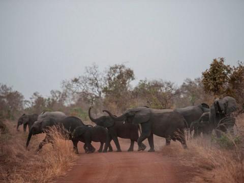 Zimbabwe Siap Jual Gajah ke Negara yang Membutuhkan
