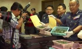 5.000 Kura-kura Disita di Bandara Malaysia