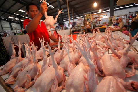 Harga Ayam Ras di Jateng Kembali Stabil