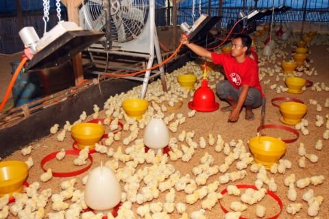 Tekan Kemiskinan, Kementan Tingkatkan Paket Ternak dan Sayur