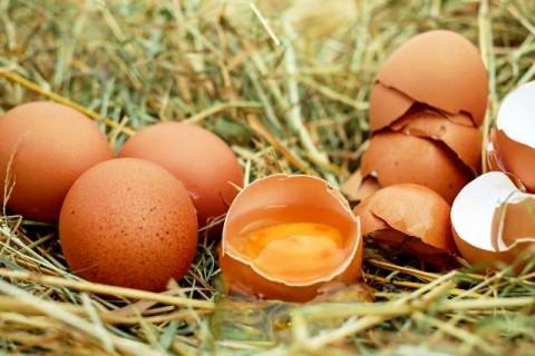 Lebih Baik Mengonsumsi Telur Coklat atau Putih?