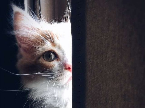 Cara Memilih Makanan yang Tepat Untuk Kucing