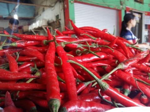 Cabai Merah di Pekanbaru Mencapai Rp90 Ribu Per Kg