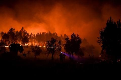 20 Orang Terluka dalam Kebakaran Hutan Portugal