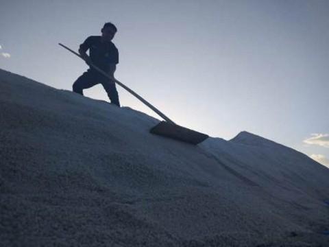 Penuhi Kualitas Industri, CIPS: Tingkatkan Kapasitas Petani Garam