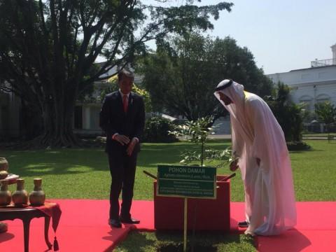 Jokowi Ajak Pangeran Abu Dhabi Tanam Pohon Damar