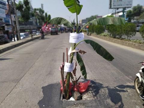 Jalan Berlubang di Tangsel Ditanam Pohon Pisang