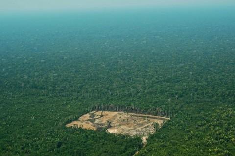 Presiden Brasil Bertekad Perangi Deforestasi Hutan Amazon