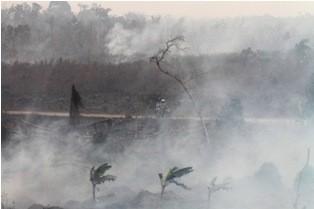 KLHK Bantah Greenpeace Soal Deforestasi di Area Moratorium