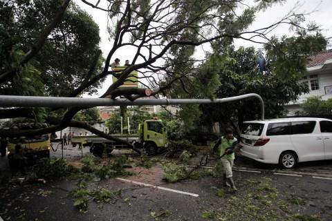 Investigasi Kementerian ESDM, Pohon Sengon Sebabkan Gangguan Listrik